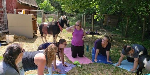 1 Hour Goat Yoga