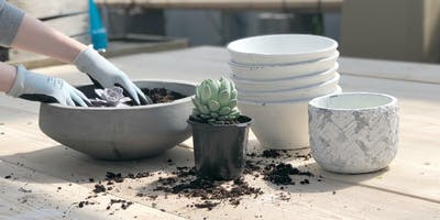 Succulent Workshop at Ground Effects