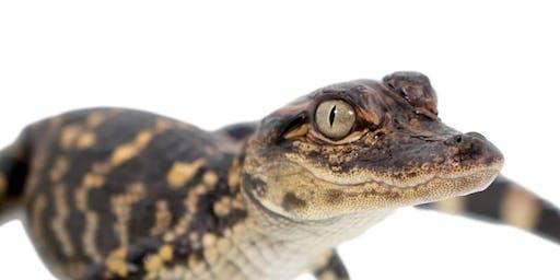Reptile Kingdom