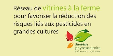 Utilisation efficace des semences traitées aux insecticides dans le maïs (Estrie) 8 juillet 2019 billets