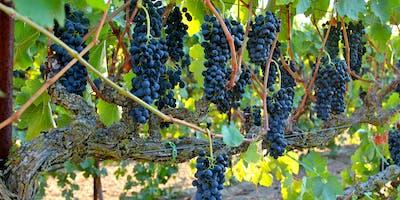 Trellis Fine Wines Vintage Wine Dinner