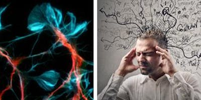 The Nervous System for Herbalists - 2020