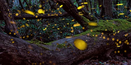 "Monthly Interpretive Hike: ""Fireflies & S'mores"" tickets"