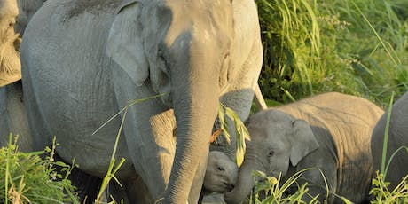 Elephant in the town: Conservation, urbanisation and development in Assam tickets