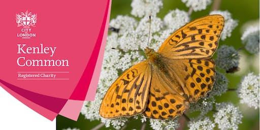 Butterfly walk - Kenley Common