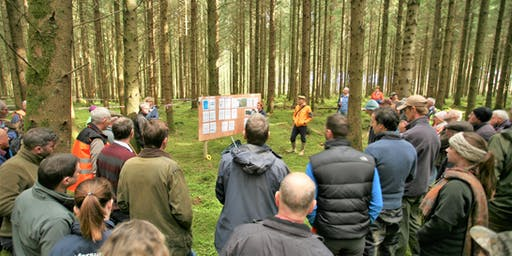 Clonad Woodland Walk on Forest Certification