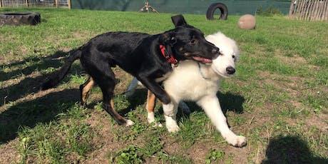 Onze begeleide speelweide: Puppy tickets