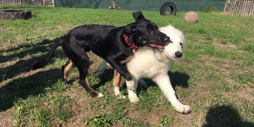Onze begeleide speelweide: Puppy
