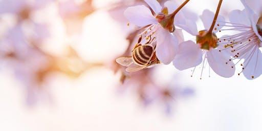 August - Beekeeping - Prepping honeybee colonies for winter
