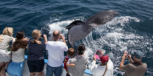 Winter Whale & Dolphin Cruises During Migration-$15 Special