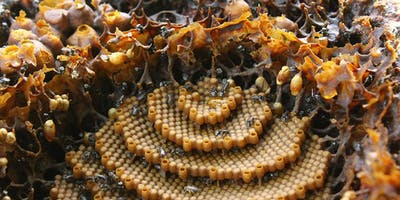 Native Stingless Bee Workshop: caring for your hive