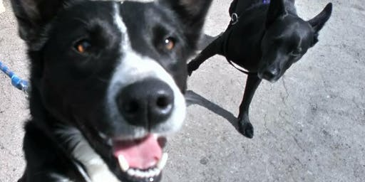 Dog Training: Manners Class