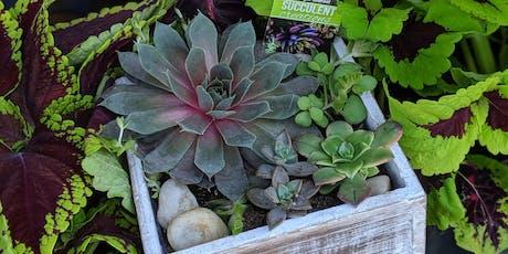 Succulent Diffuser Garden Class tickets
