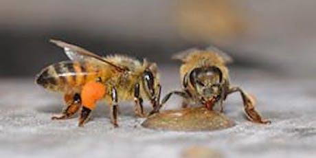 "'Honey bees as super-organisms"" presented by Dr. Jamie Ellis tickets"