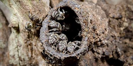 NaturallyGC Australian Native Bees tickets