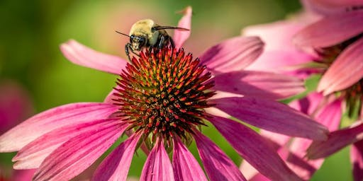 Native Plants and Other Gardening Tips to Attract Pollinators