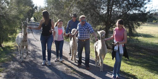 Alpaca Farm Tour - Alpaca Adventure