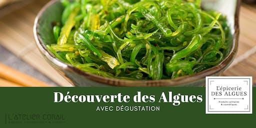 Découverte des algues, avec dégustation