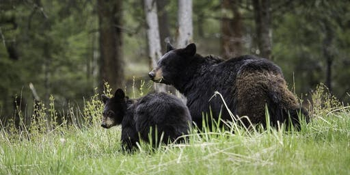 Our Wild Colorado: Living with Black Bears (Children are FREE)