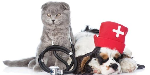First Aid & CPR for your pet