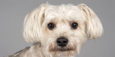 Pet Portrait Event (Alsager) - A day to remember for you & your pet