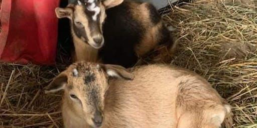 Goat Yoga Sunday, June 30, 2019
