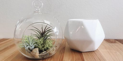 Air Plant Terrarium & Candle Making Class
