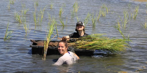 Bayou Bonfouca Marsh Restoration Planting Event on October 5, 2019