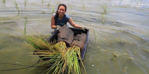 Bayou Bonfouca Marsh Restoration Planting Event on October 19, 2019