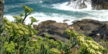 Coastal Wild Food Foraging Workshop (Evening) tickets
