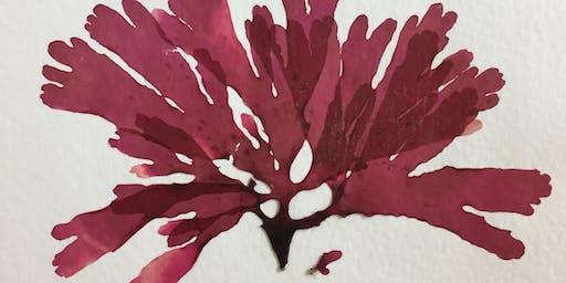 Seaweed Foraging & Pressing