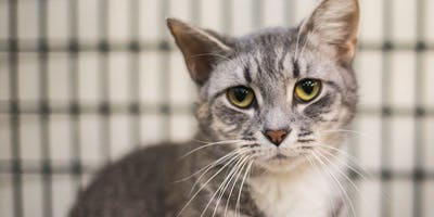 Caring For Your Cat When You No Longer Can