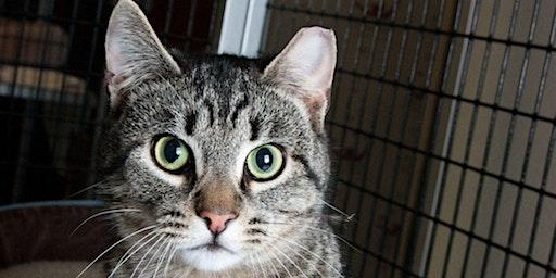 Our Community, Our Cats - TNVR Basics