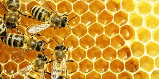 Northern Natural Beekeeping Conference