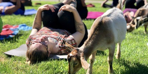 Sunrise Animal Sanctuary Yoga Brunch