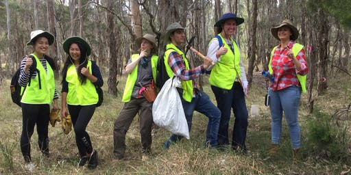 Conservation Volunteers' BBQ Fun & the Nodding Geebung!