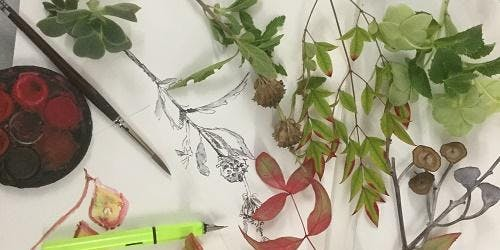Drawing in Nature - StArt Arts