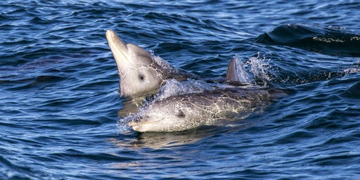 Dolphin Watch Day - 10-year anniversary event