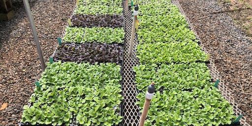 Vegetable Seedling Propagation Workshop