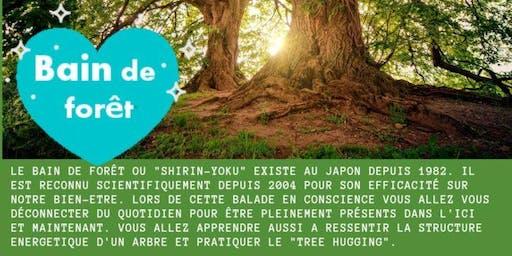 Bain de forêt en Normandie, venez découvrir la sylvothérapie