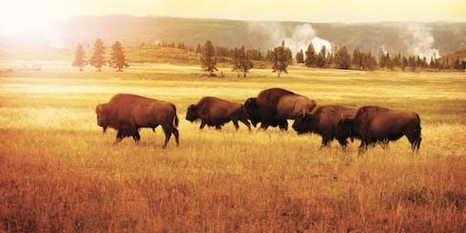 8-day Yellowstone Meditation Retreat