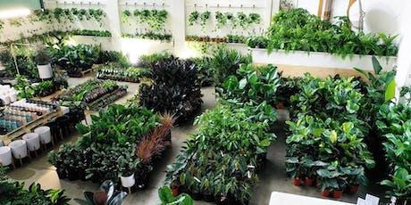 Mega Indoor Plant + Pot Warehouse Sale - Pop Up Shop tickets