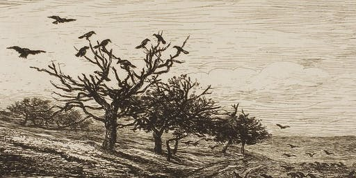 Drawing Trees with Charcoal - Tree Fayre