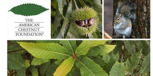 American Chestnut Foundation KY Chapter Annual meeting