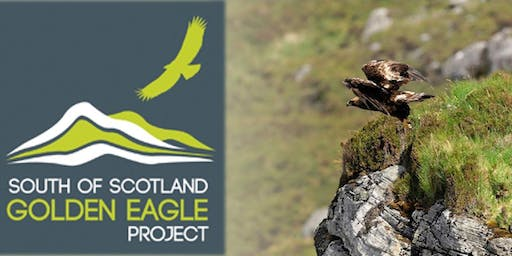 South of Scotland Golden Eagle Project update - East