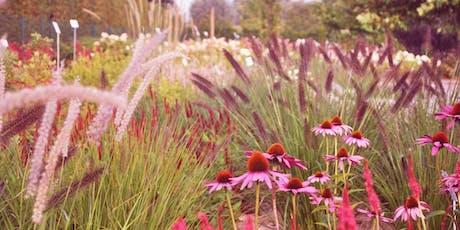 Plantenborder / Massif de plantes billets