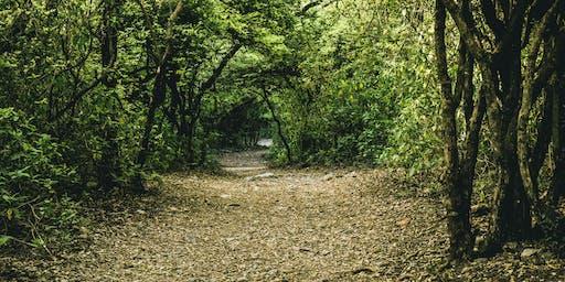 Into the Woods Thornbury: Local Nature Walk