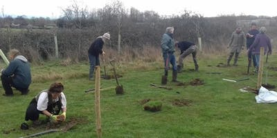 Trees for Somerset: Trees for your Parish
