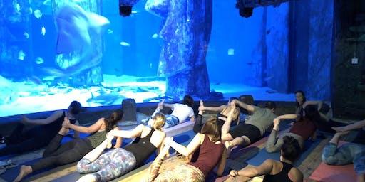 Yoga Under the Sea at London Aquarium