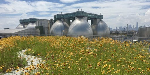 The State of Green Roofs in NYC 2019